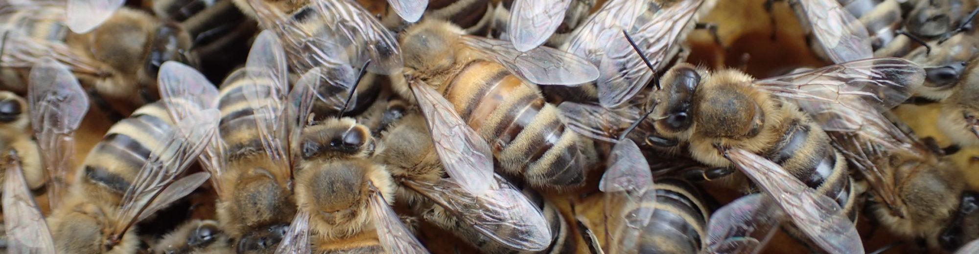 Český včelařský institut